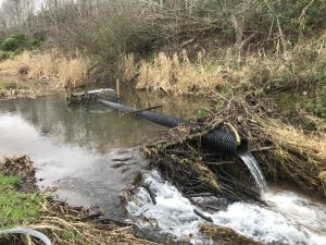 Beaver dam with flow control pipe